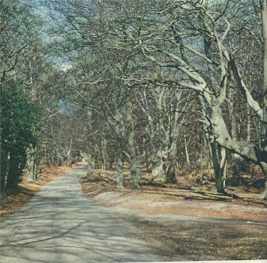 Burnham Beeches in Winter 1949